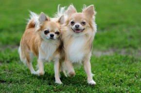 犬を飼うのはたやすい事では無い!愛犬に時間とお金をかけれますか?