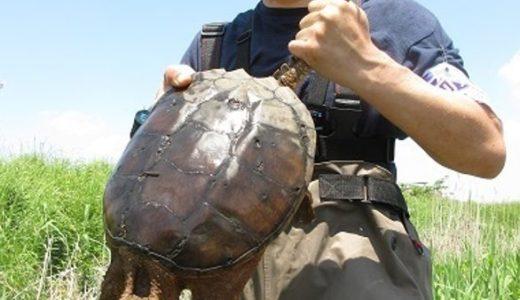 爬虫類ハンター加藤英明の職業と年収が凄い!大学講師で博士(農学)学位取得
