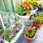 園芸にうつ病改善効果がある?畑しごとがセロトニンを倍増し老化防止に最適!
