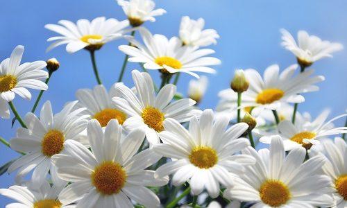 ガーデニング初心者が初めて植える花はどれ?多年草を地植えで増やすポイント