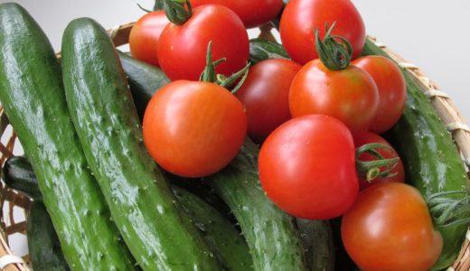 ベランダ菜園キュウリの育て方・収穫量を多くする為にするべき摘芯と摘葉の方法
