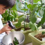 はじめてのベランダ菜園・失敗しないポイントは?最適な培養土を使用し育てること