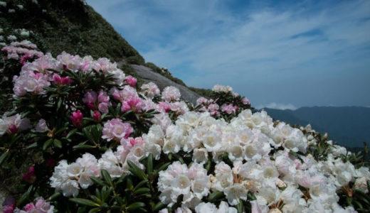 屋久島シャクナゲ登山の見どころと屋久島が世界自然遺産になった3つの理由は?