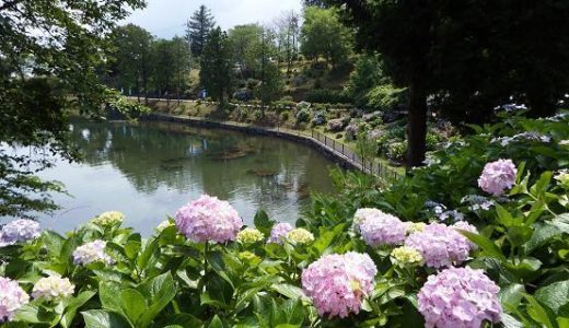 あじさいの名所・和歌山・三重・近距離の無料で散策できるお勧めスポットは?
