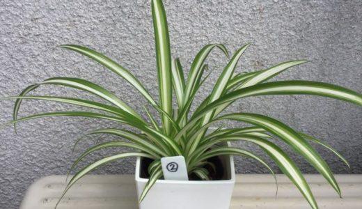 観葉植物に虫がわかない方法は?原因と対処法は土選びと水やり