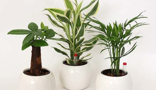風水で幸運を呼ぶ観葉植物の置き場所・金運アップするのはどれ?