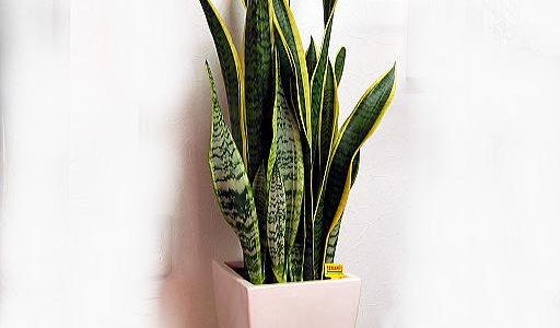 空気を清浄する観葉植物がある!効果がある理由と効果的な植物はどれ?
