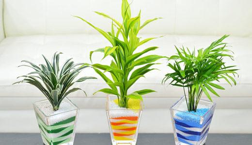 カラーサンドやプラントビーズでの観葉植物の育て方は簡単で手間いらず