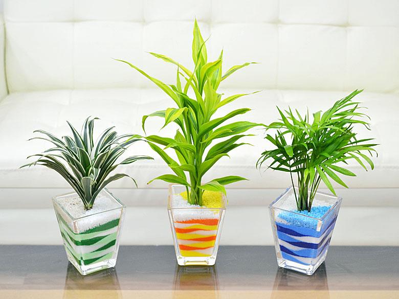カラーサンドやプラントビーズでの観葉植物の育て方は簡単で手間