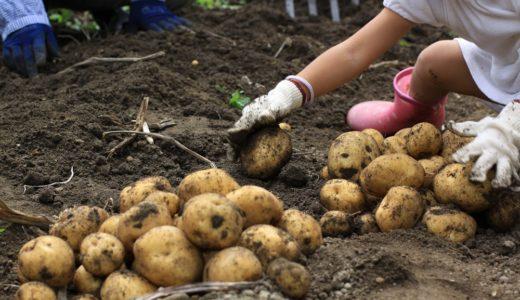 ジャガイモの食中毒に農林水産省が警告!原因と症状や対策は?
