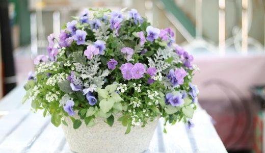 新感覚の寄せ植えギャザリングの作り方・少ない花でも豪華に見せる技法