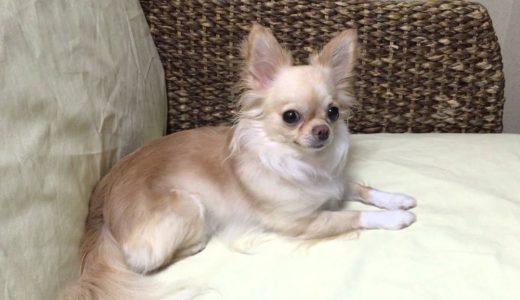 犬を飼うメリットとデメリット・愛犬に時間とお金をかけれますか?