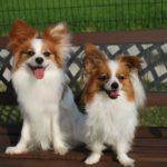 獣医が教える犬の口臭の原因は?臭いで隠れた病気を判断する方法