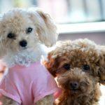 初めて飼う犬のお勧めはどれ?犬選びの条件7項目をチェック