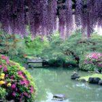 藤の花がきれいな近畿・中国・四国・九州地区の開運神社とご利益寺9選