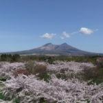 北海道は5月が桜満開!インスタ映えする桜の名所15選