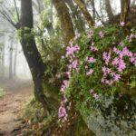 熊野古道散策の服装選びと四季折々の可憐な花との出会い
